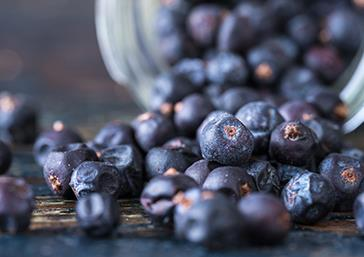 Loose Juniper Berries - Pentland Hills Gin