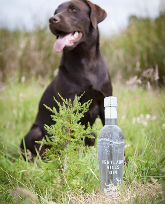 Panzer With The Gin In The Grass - Pentland Hills Gin