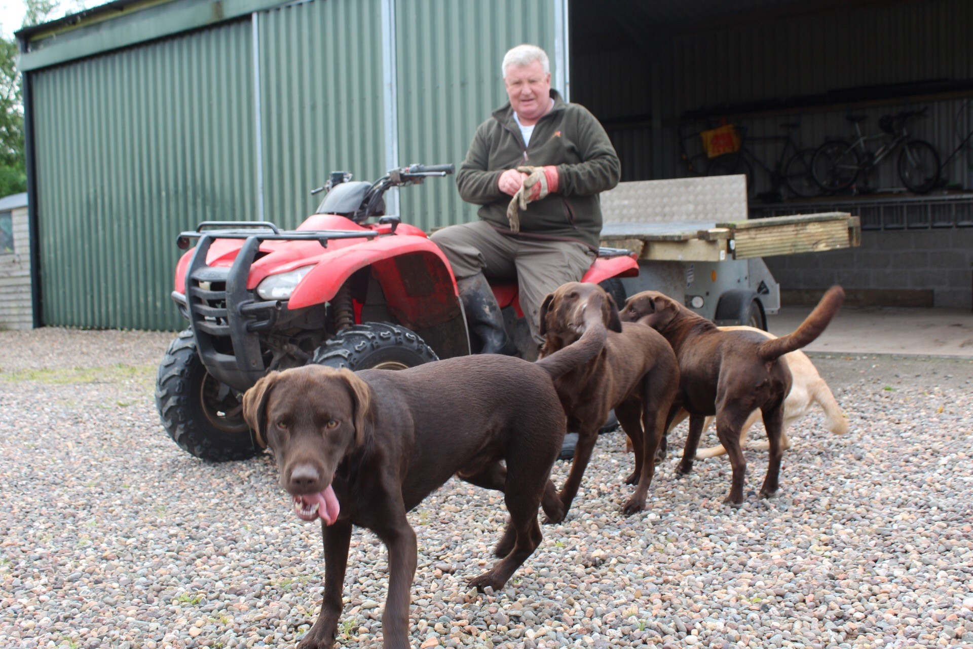Labradors Surround Quad Bike
